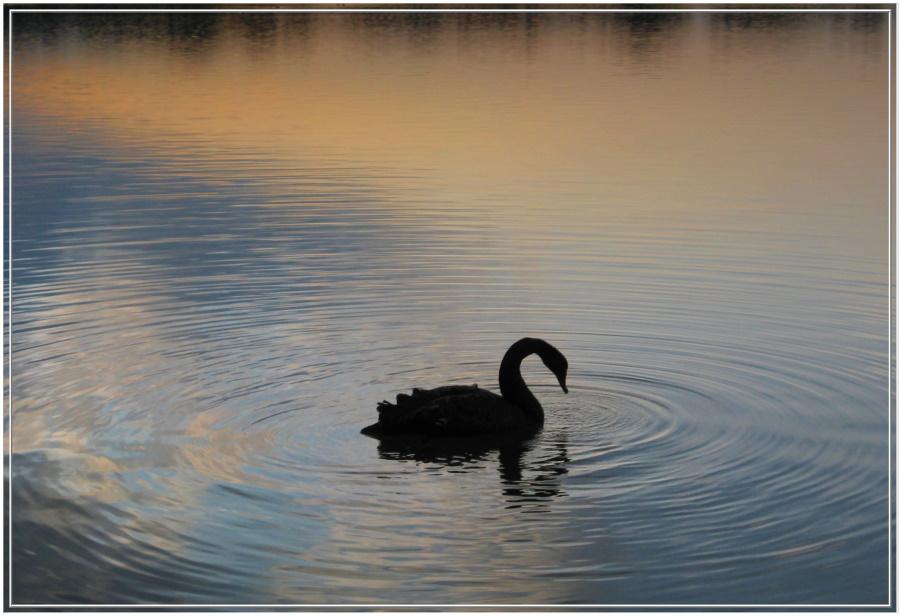 Der Schwarze vom Schlingener See