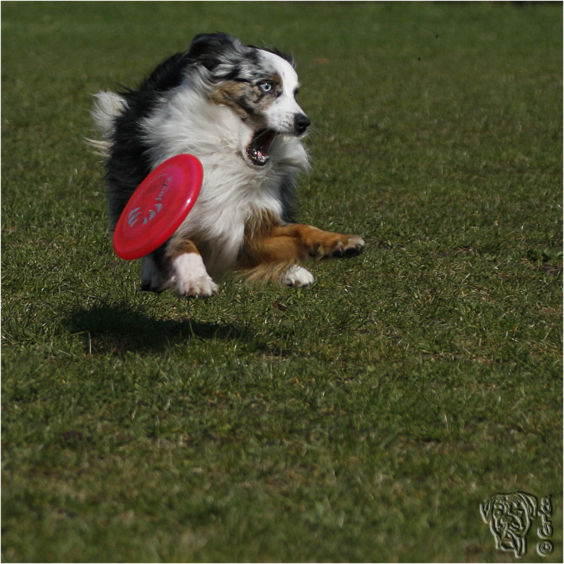 der schwebende hund