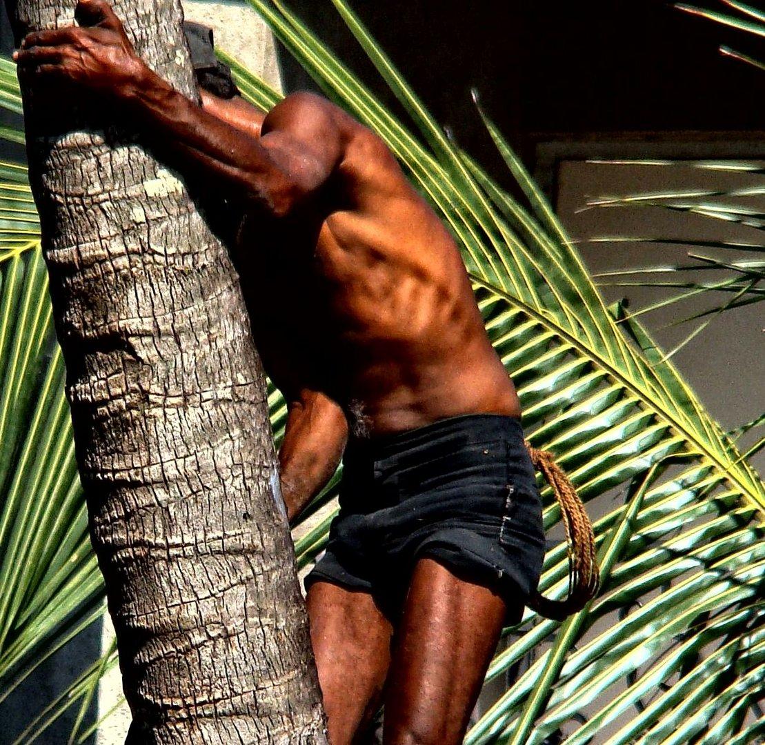 Der Schweiß der Kokosnuss