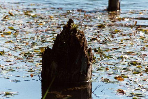 Der See der nie sterbenden Bäume