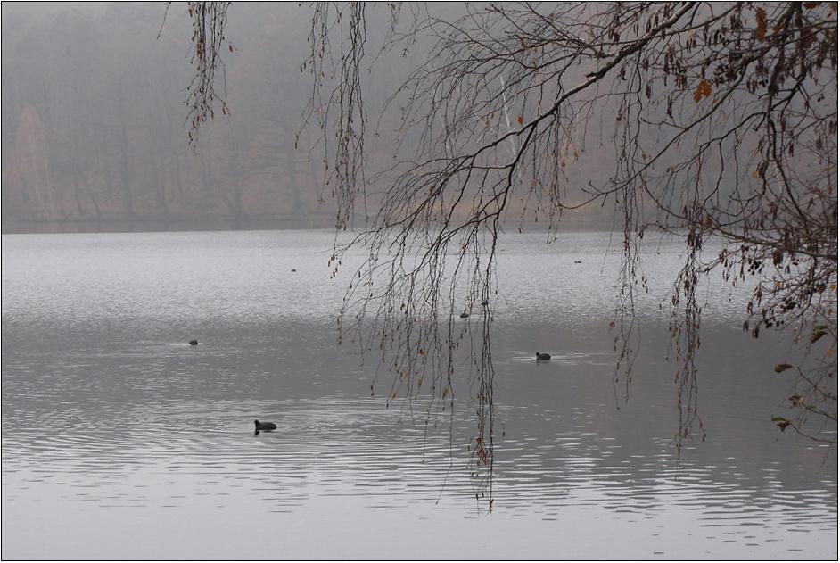Der See im November