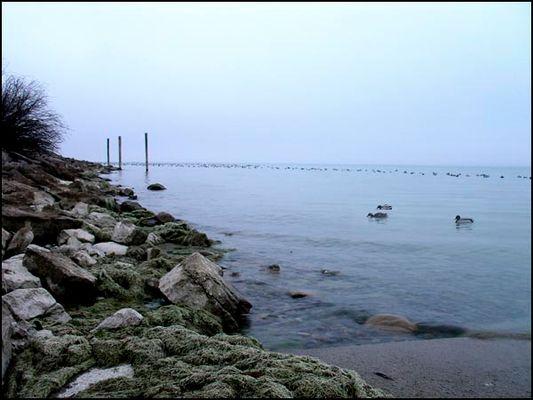 Der See ist kalt - die Enten frieren