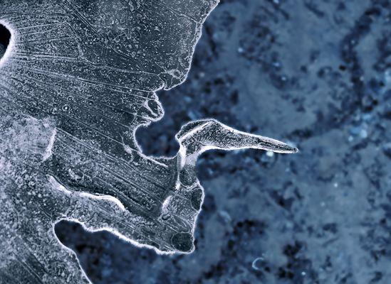 Der seltene Eis-Fisch-Reiher am Bergsee! - Le héron glacé à l'envol sur le lac de montagne!