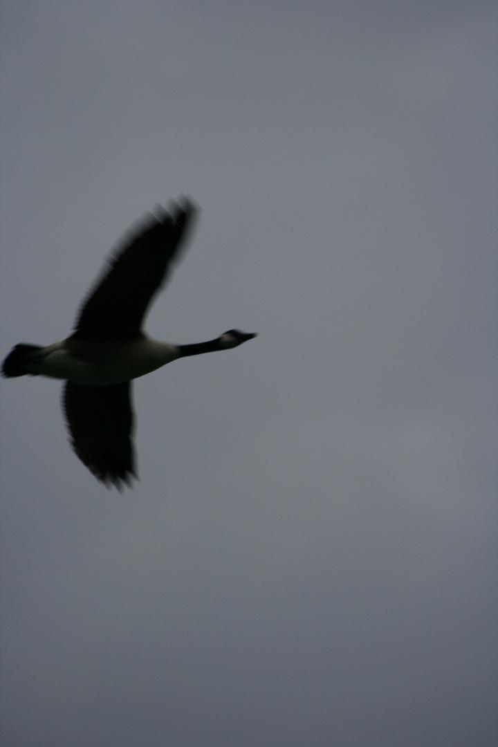 Der Silhouettenvogel!