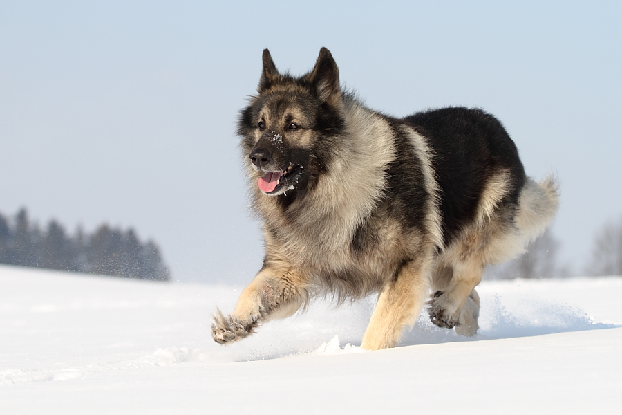 Der Snowwalk :-)