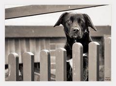 Der sog. Hundeblick