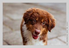 Der sog. Hundeblick :-)
