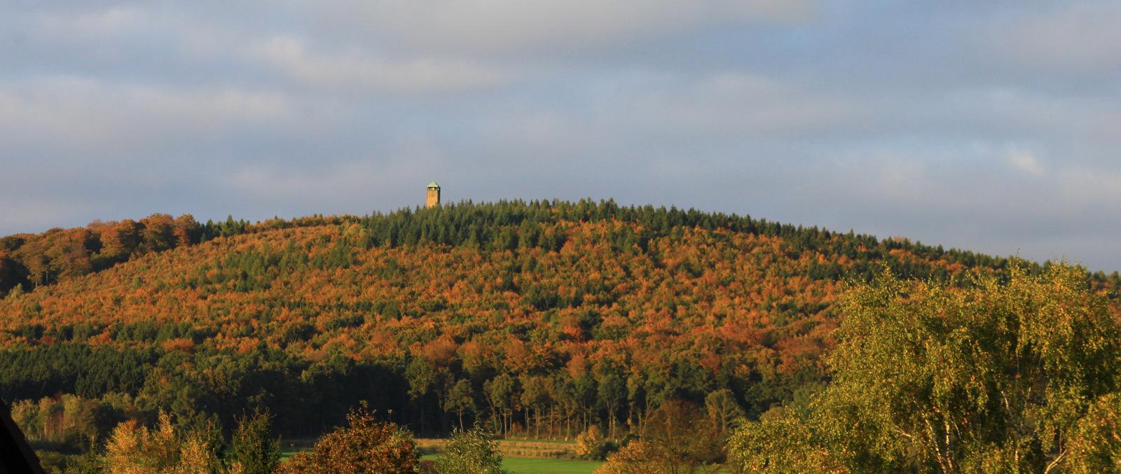 """-Der Sollingturm mitten im Wald """"des Jahres in Deutschland""""-"""