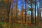 -Der Sollingwald-