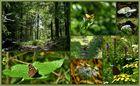 der Sommer im Wald...