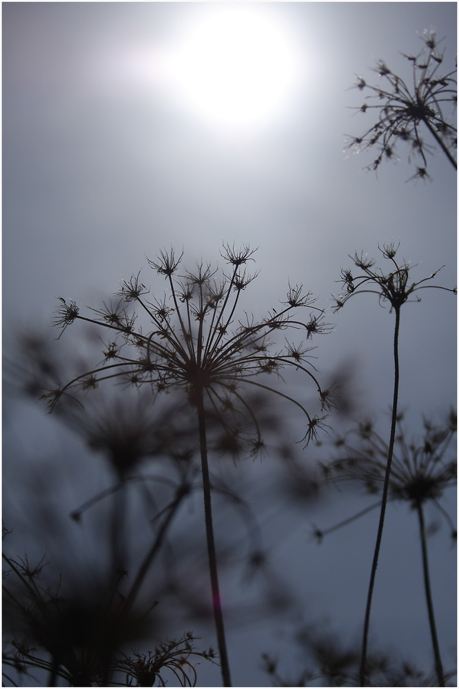 Der Sonne entgegen.