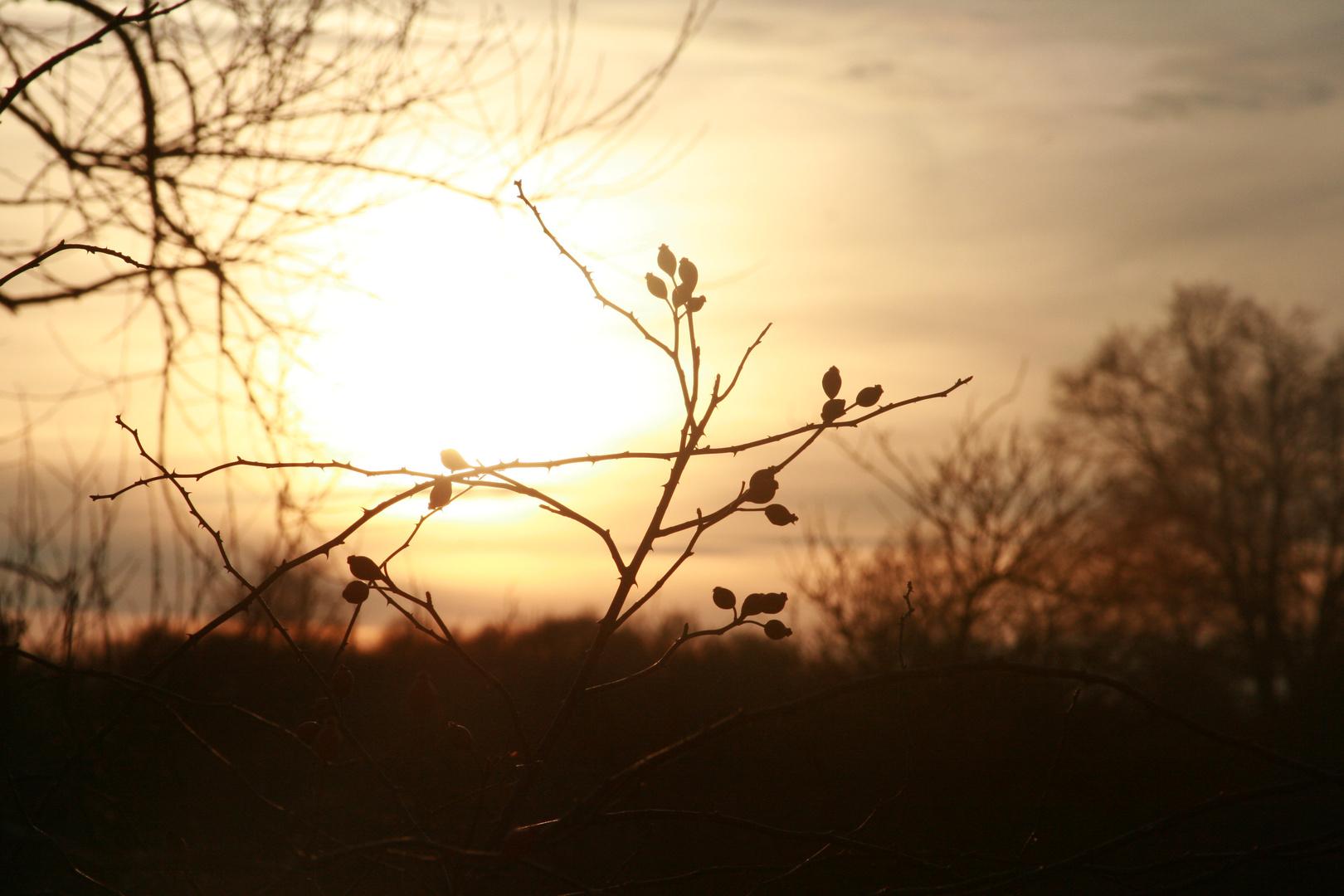 * der Sonne entgegen*