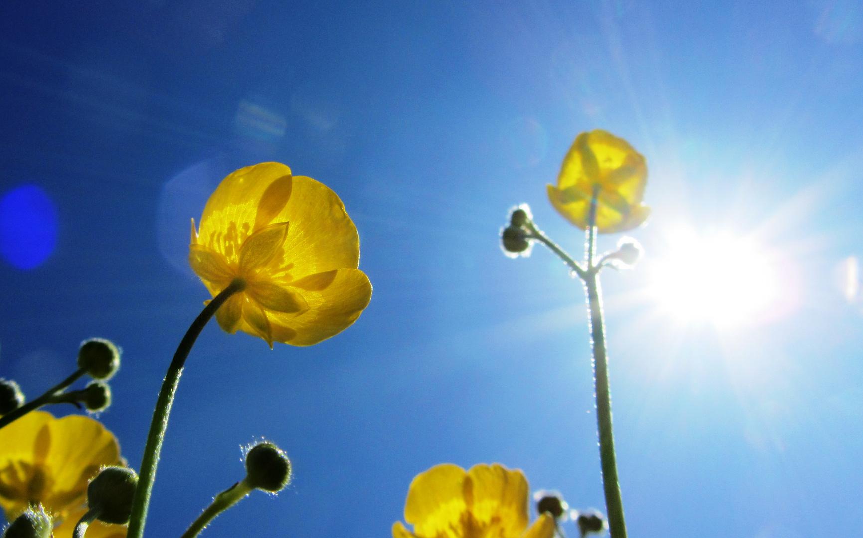 der Sonne entgegen / growing with the sunlight