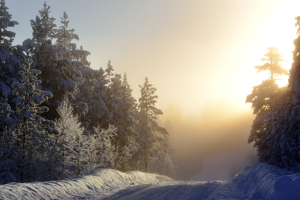 Der Sonne entgegen.......Finnland, Lappland, Februar 2013