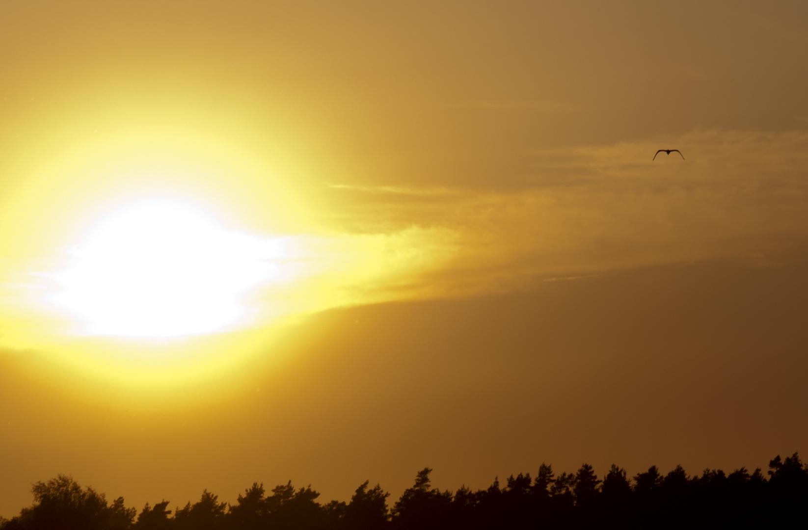 Der Sonne hinterher