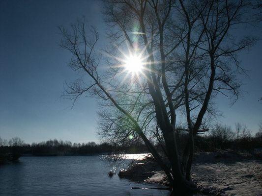 """Der """"Sonnenbaum"""""""