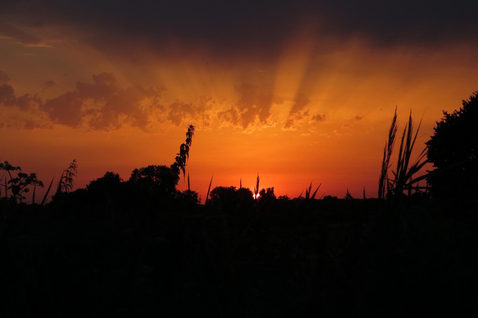 Der Sonnenschein aus Westenholz