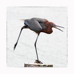 Der Sonntagsvogel