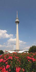 Der Spargel in Berlin