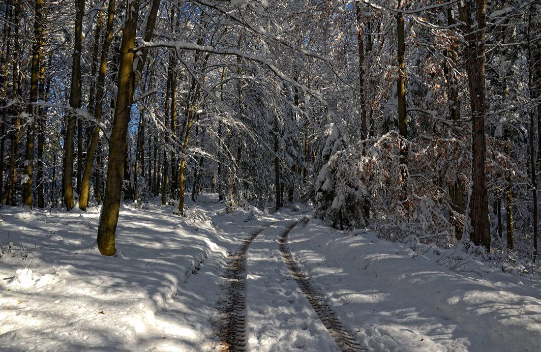 Der Spaziergang durch den Winterwald