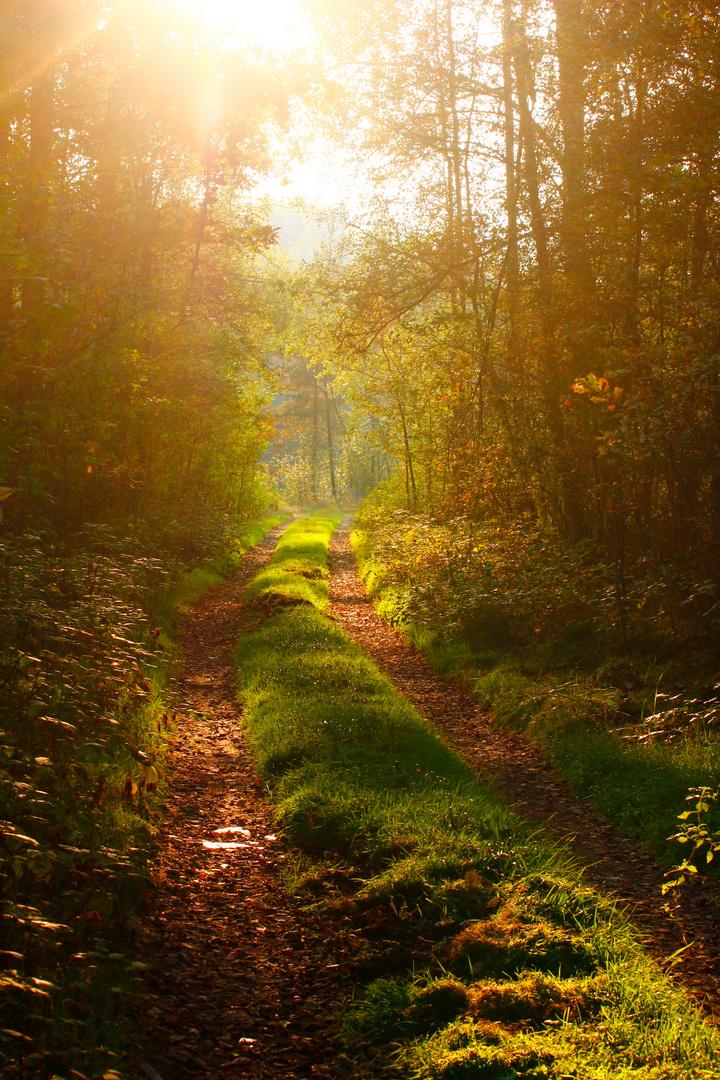 Der Spazierweg