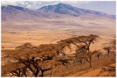 Der staubige Weg zur Serengeti
