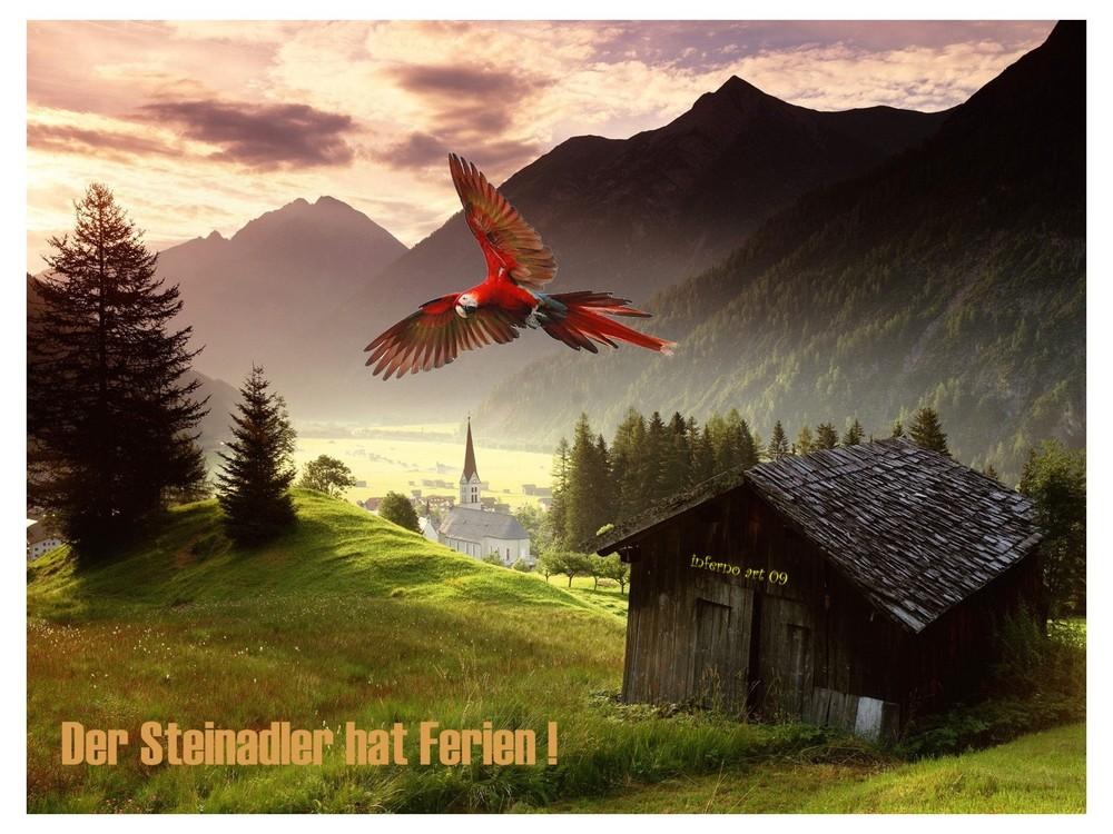 ...der Steinadler hat Ferien .... der Papagei springt ein ...!