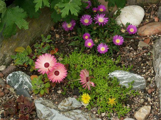 Der Steingarten blüht