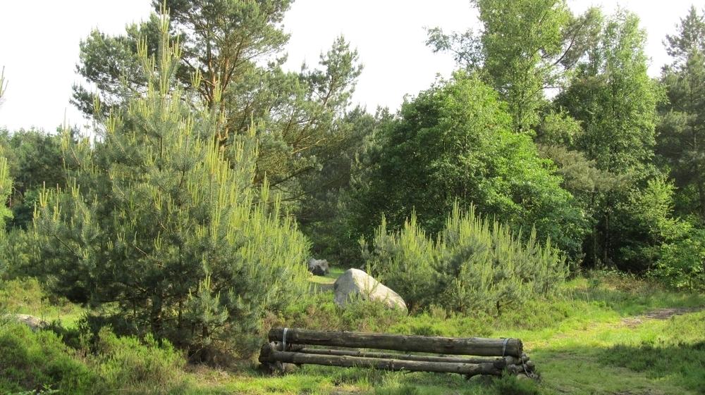 Der Steingarten ich auch gleichzeitig ein Pferde - Tunierplatz