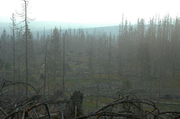 Der sterbende Wald