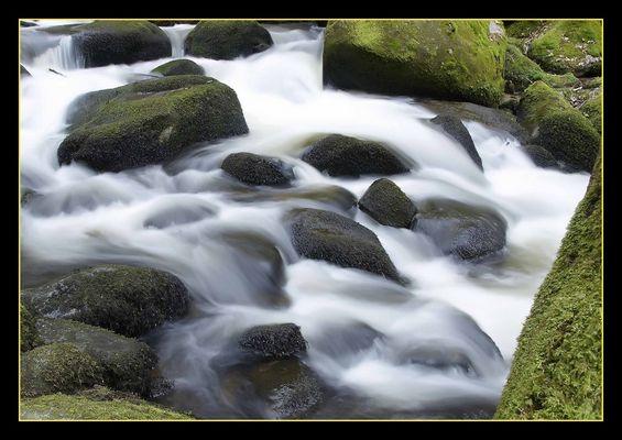 Der Stille Bach im Schwarzwald