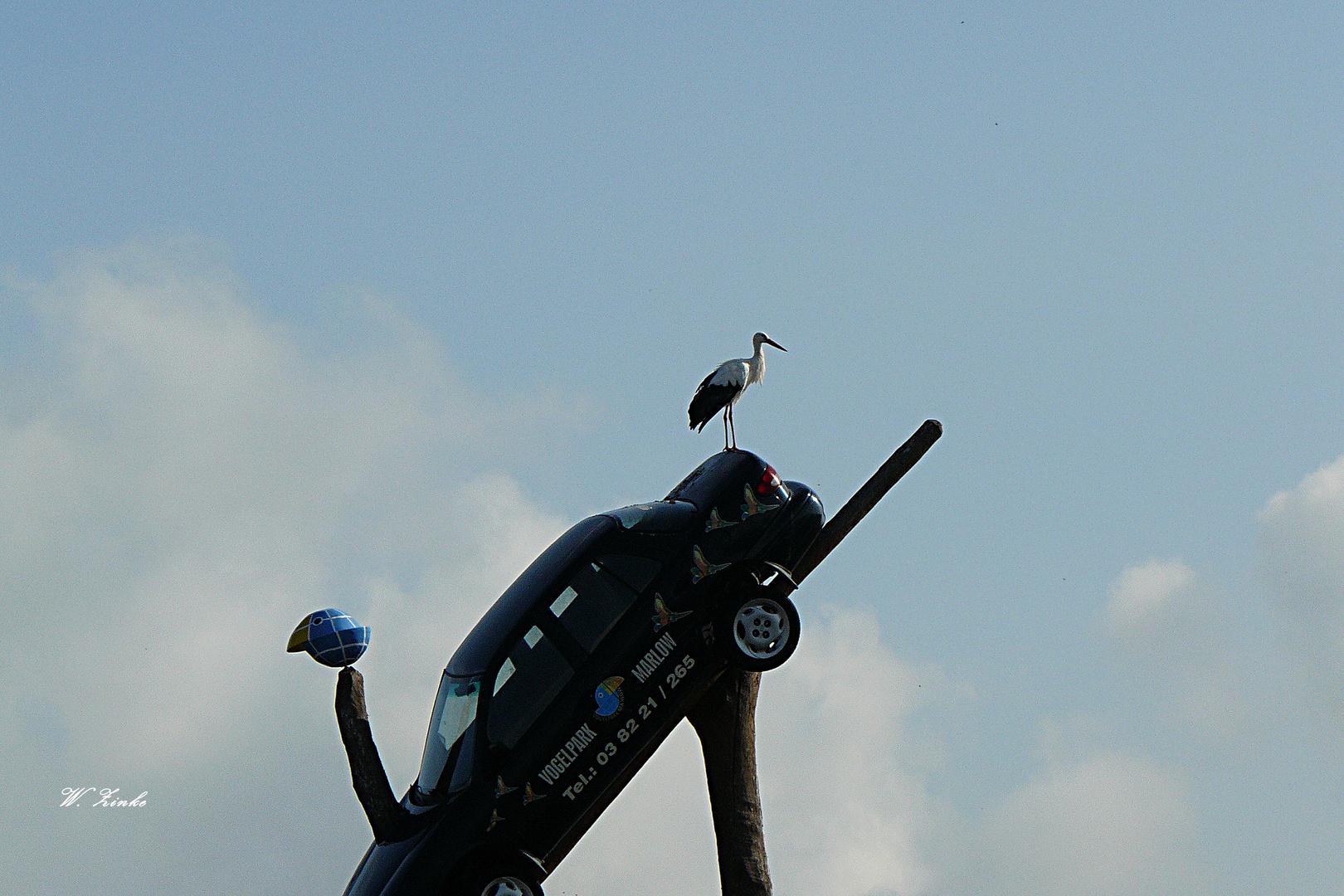 Der Storch begrüßt die Gäste auf dem Parkplatz im Vogelpark Marlow
