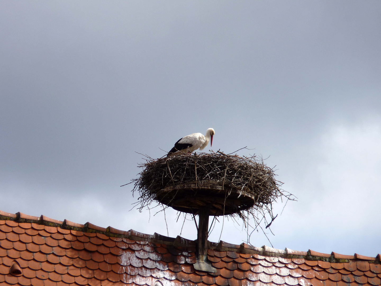 Der Storch im Nest