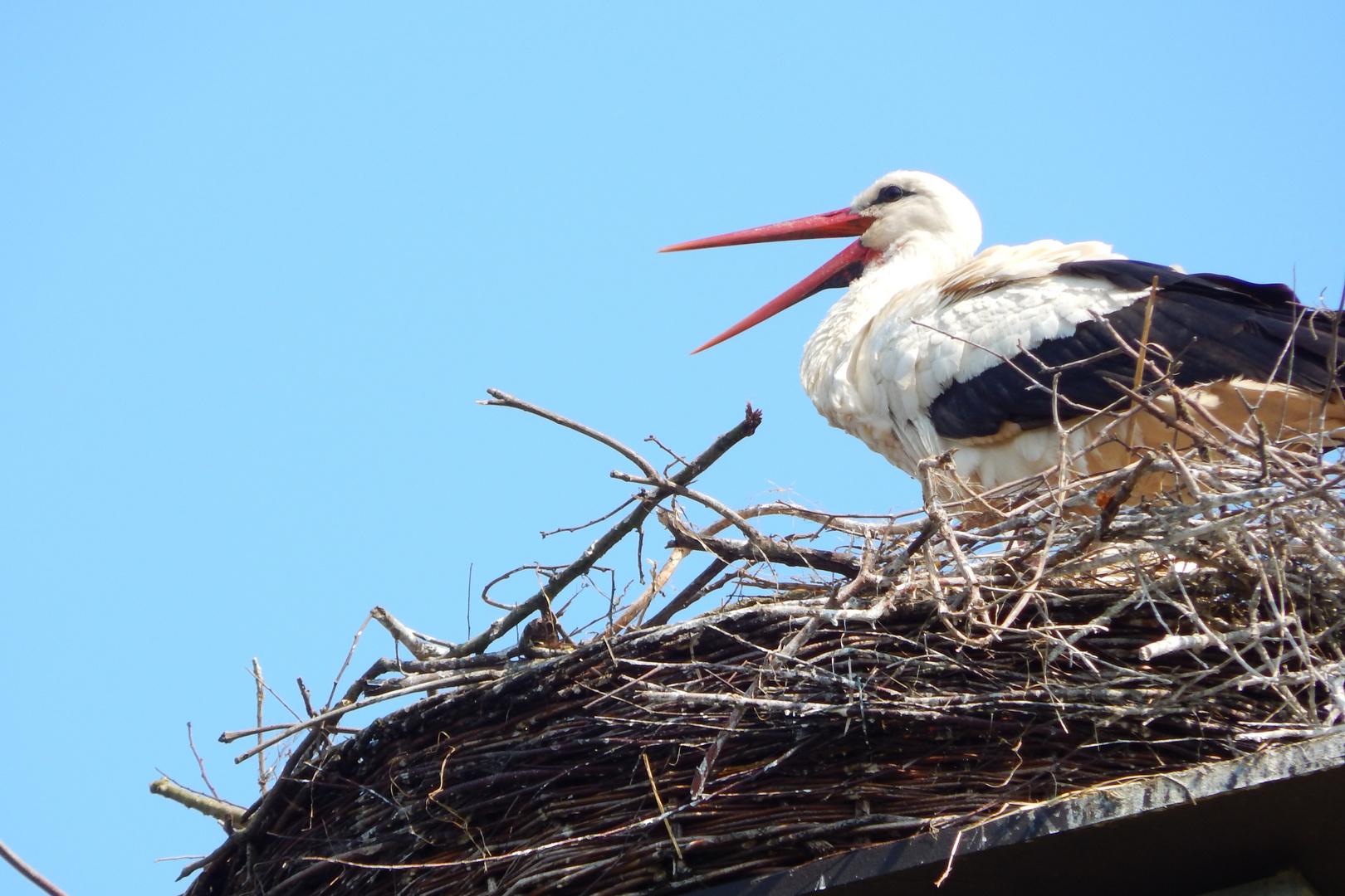 """Der Storch machte dem Namen """"Klapperstorch"""" alle Ehre!"""