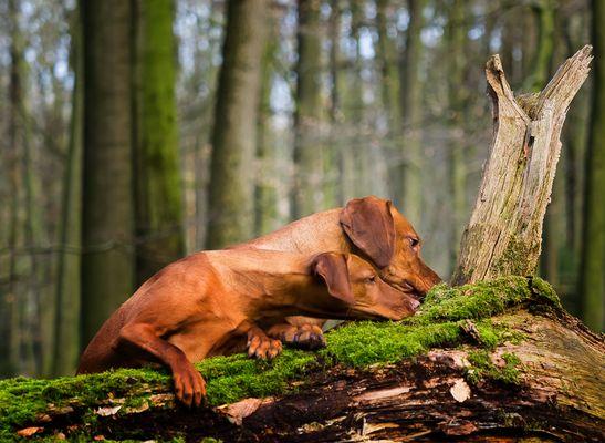 Der Suchenbaum