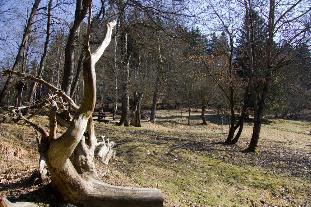 Der Süd-Harz