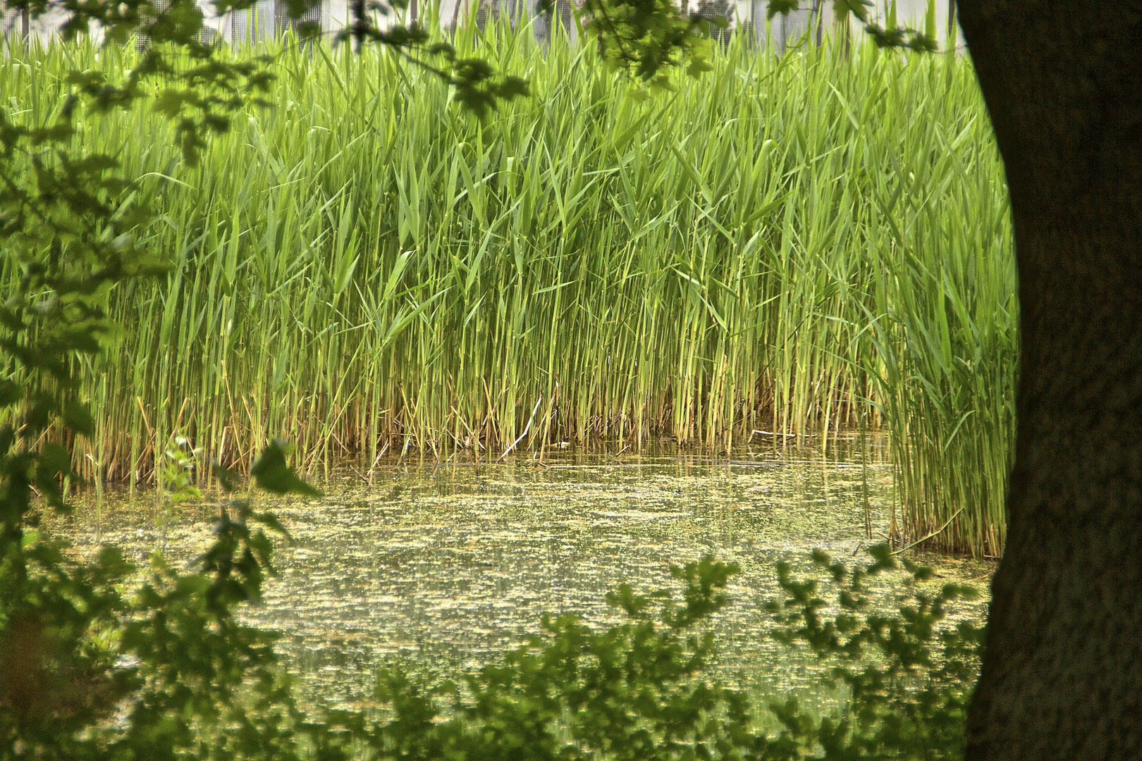 der Sumpf