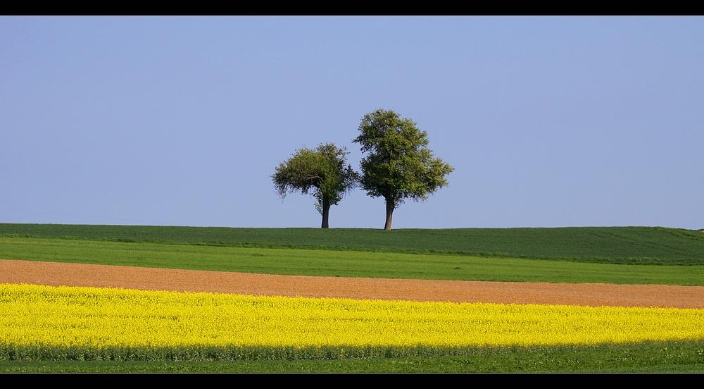 Der Tag des Baums...