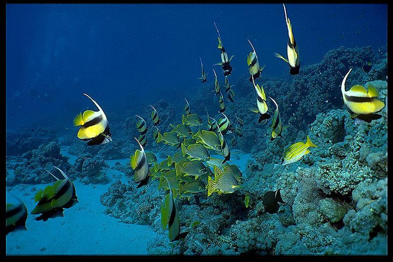 der Tanz im Riff