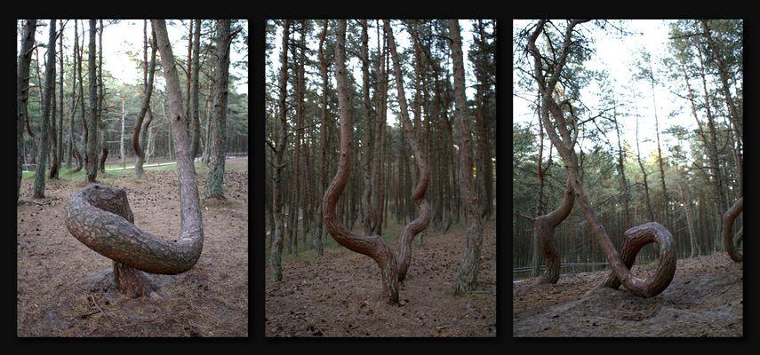 Der tanzende Wald 2 - The dancing Forest