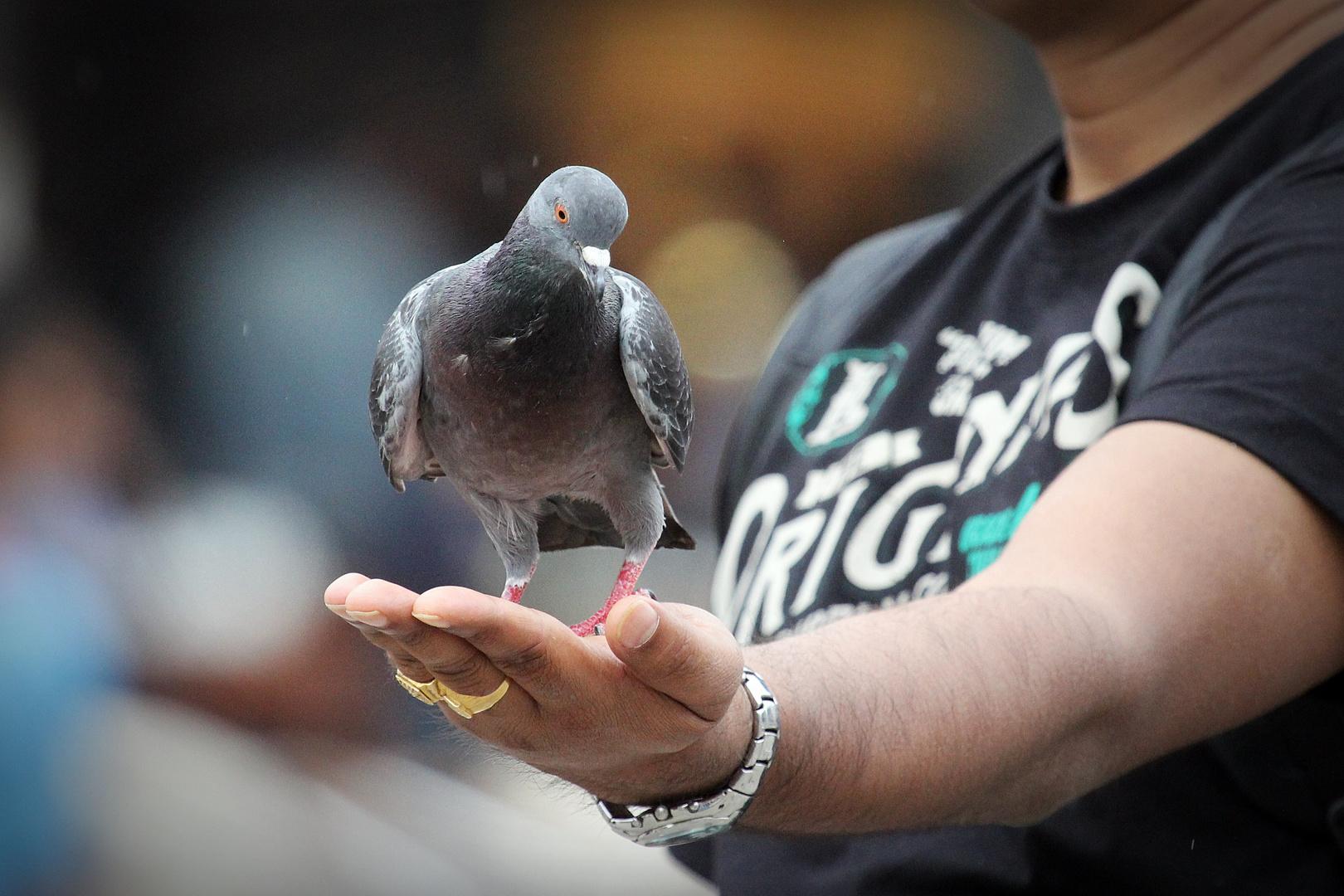 ~Der Taubenflüsterer~