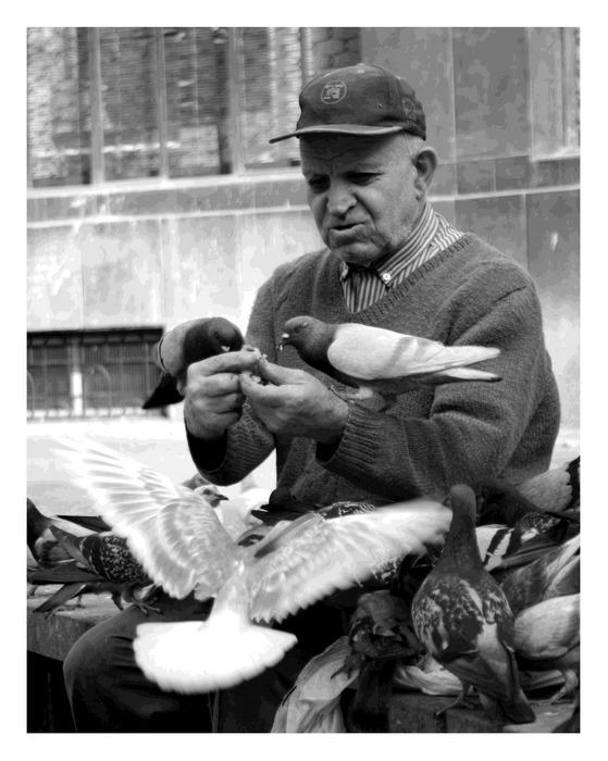 Der Taubenmann und seine große Familie