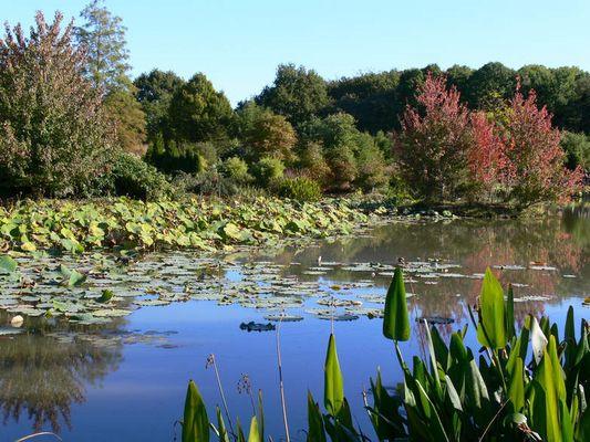 Der Teich im Arboretum 2