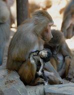 Der Tod des kleinen Affen (reload)