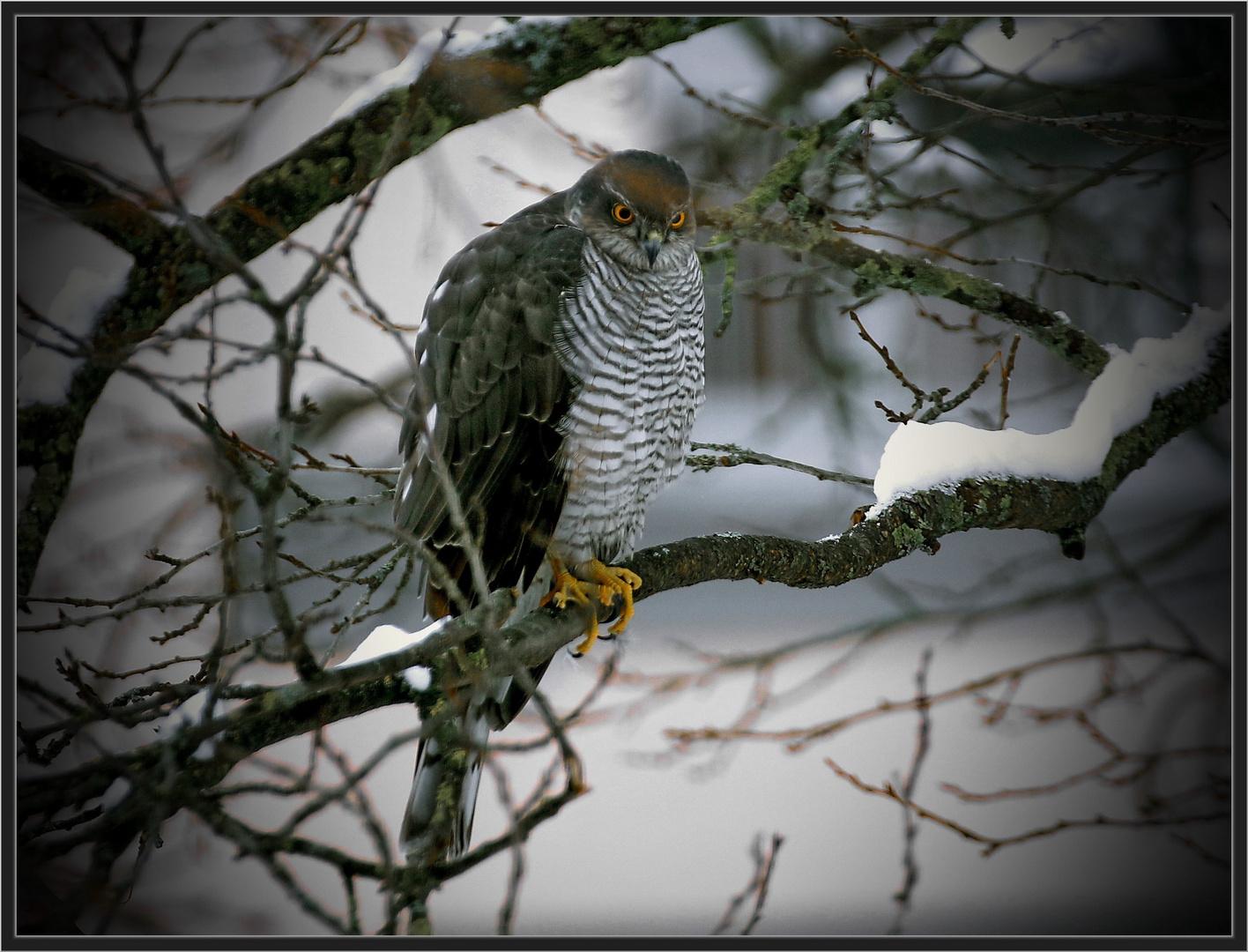 "Der ""Tod"" im Zwetschgenbaum"