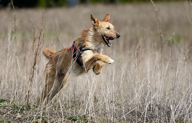 Der tollste Hund, den es gibt