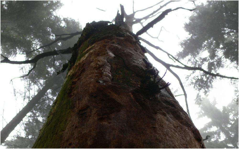Der tote Baum im Morgennebel