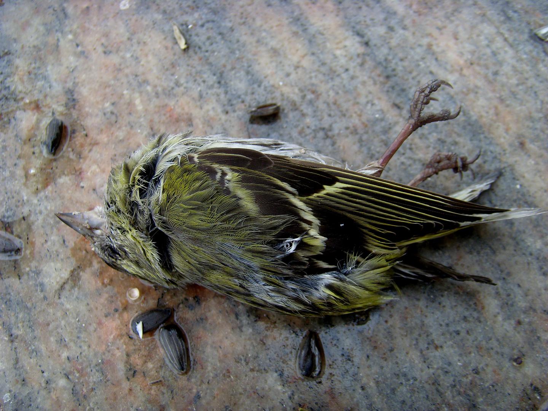 Der tote Vogel