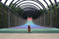 Der Tourist auf der Rehberger Brücke