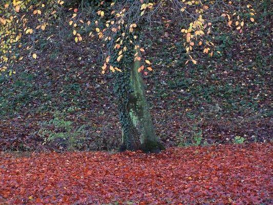 Der traurige Herbst kann auch schön sein